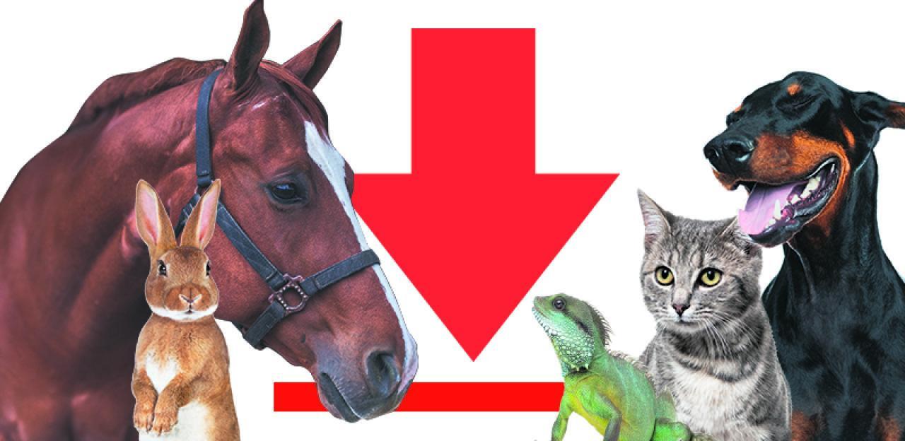 Schicken Sie uns  Tierfotos und TierGeschichten
