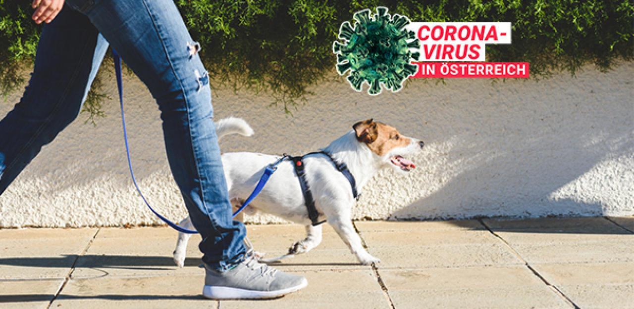Gassigehen in Zeiten der Coronakrise