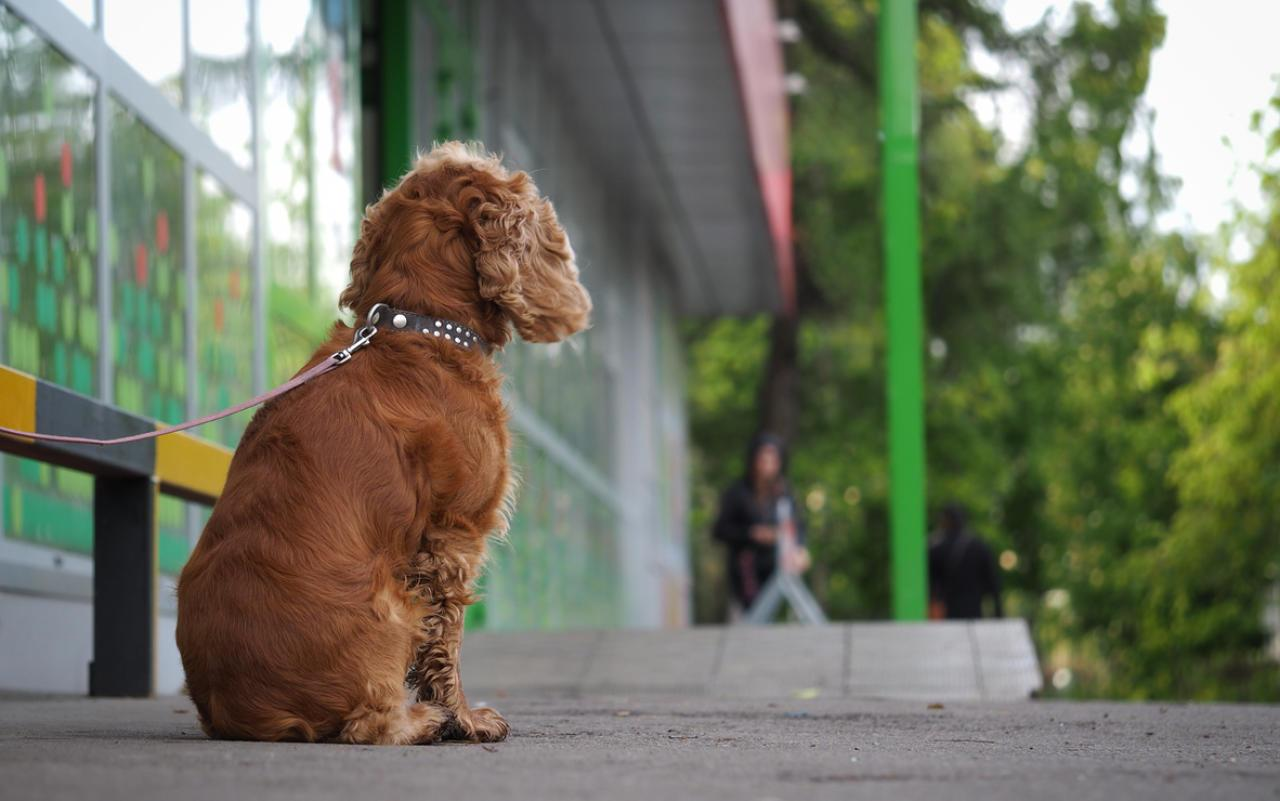 Bitte lasst Hunde nicht alleine vor Geschäften